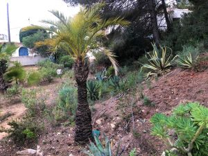 Land for sale in El Baladrar