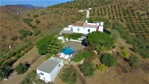 3 bedroom villa with 3 hectares of farmed land